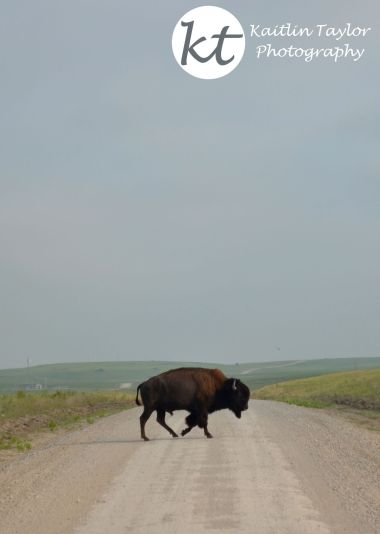 Buffalo2RoadWebLogoTop