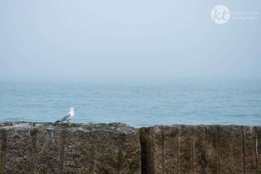 SeagullWeb-1