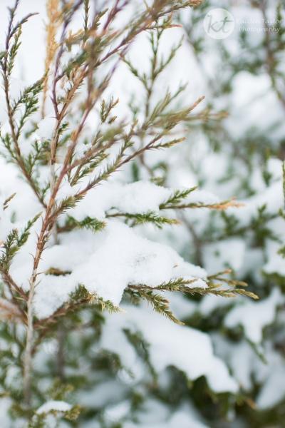 Snow2015Web-2