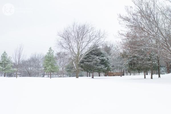 Snow2015Web-6