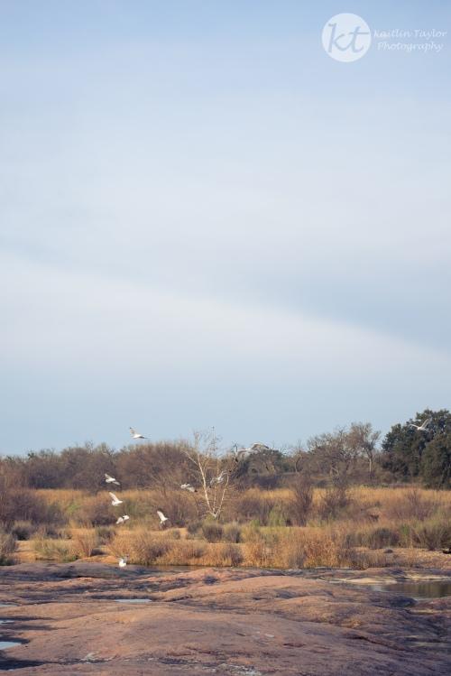 LlanoMorningWeb-1