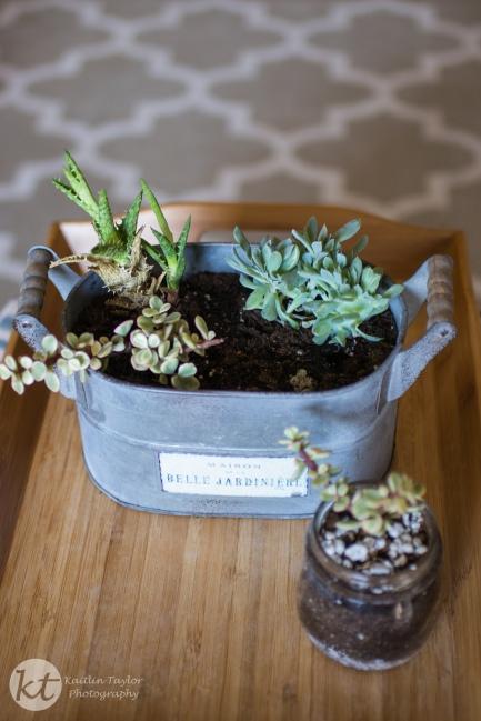 Succulents2015-2