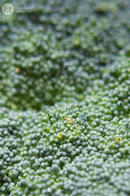 014-150816-BroccoliMacro-Web