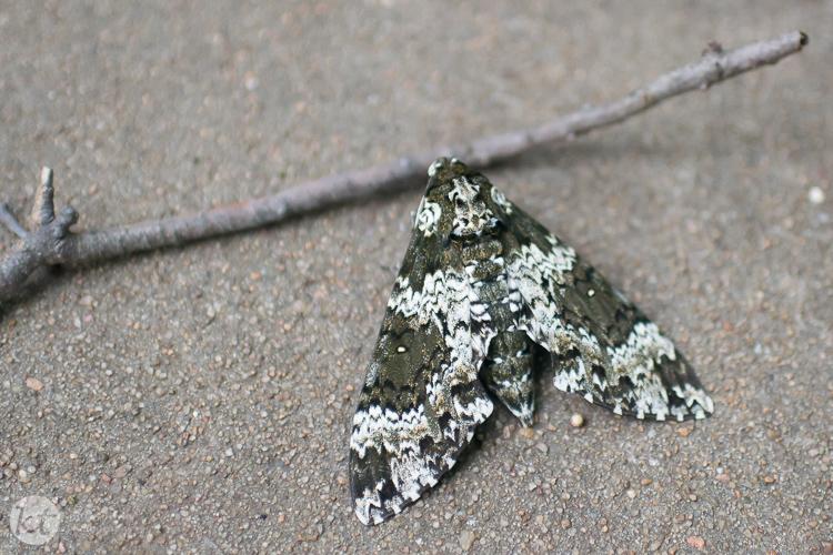 023-150827-Moth-Web