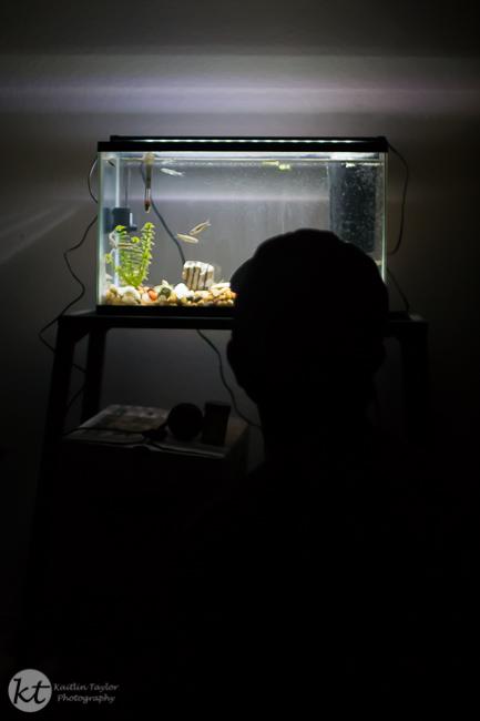 038-151007-FishTank-Web